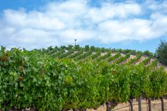 Vineyards at Sonoma valley. Sonoma valley is world renowned for its wineries royalty free stock images