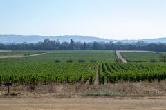 Vineyards at Sonoma valley. Sonoma valley is world renowned for its wineries royalty free stock photography