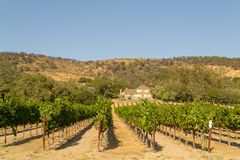 Vineyards at Sonoma valley. Sonoma valley is world renowned for its wineries stock photo