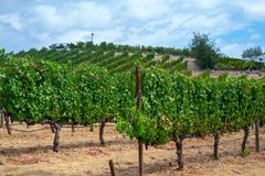 Vineyards at Sonoma valley. Sonoma valley is world renowned for its wineries royalty free stock photos