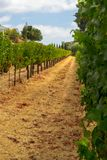 Vineyards at Sonoma valley. Sonoma valley is world renowned for its wineries stock images