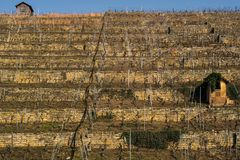 The vineyards in the south of Germany. The big vineyards in the south of Germany stock images