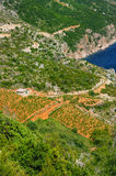 Vineyards, southern coast of Hvar island Stock Photo
