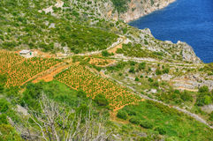 Vineyards, southern coast of Hvar island Stock Photos