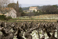 Vineyards in Southern France. Vineyards and houses in the Provence wine region in southern France Stock Images