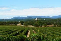 Vineyards in southern France Royalty Free Stock Photo