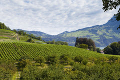 Vineyards in Spiez Stock Photos