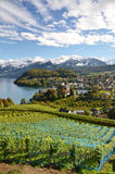 Vineyards in Spiez, Switzerland Stock Image
