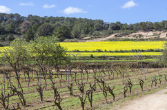 Vineyards in spring in ibiza, Spain Stock Images