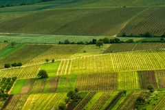 Vineyards, spring, Moravia stock photography
