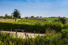 Vineyards in St. Emilion, France Stock Images