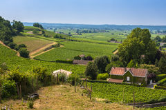 Vineyards in St. Emilion, France Royalty Free Stock Images