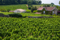 Vineyards in St. Emilion, France Stock Photography