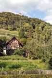 Vineyards in Stein am Rhein. In Switzerland surrounded by trees on a cloudy day. It´s a vertical picture with a house Stock Photo