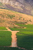 Vineyards of Stellenbosch wine region outside of Cape Town South Stock Photography