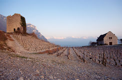 Vineyards and stone tower at sunset in France Stock Images