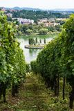 Vineyards in Stuttgart Royalty Free Stock Photos