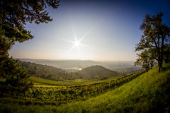 Vineyards in Stuttgart Royalty Free Stock Image