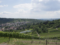 Vineyards in Stuttgart Royalty Free Stock Images