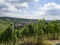 Vineyards in Stuttgart Royalty Free Stock Photo