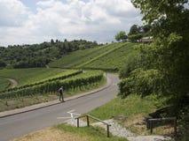 Vineyards in Stuttgart Stock Images