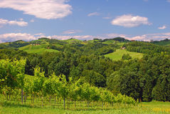 Vineyards in Styria,Austria Royalty Free Stock Image