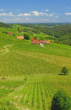 Vineyards in Styria,Austria Royalty Free Stock Photos
