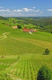 Vineyards in Styria,Austria Royalty Free Stock Photos