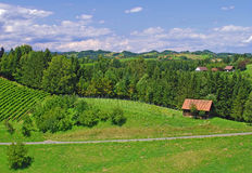 Vineyards in Styria,Austria Stock Photos