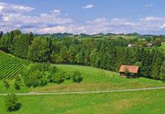 Vineyards in Styria,Austria Stock Photos
