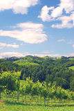 Vineyards in Styria,Austria Royalty Free Stock Photo