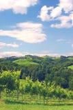 Vineyards in Styria,Austria Royalty Free Stock Photo