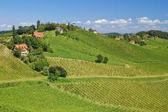 Vineyards in Styria,Austria Stock Images