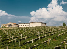 Vineyards sunny day with white ripe clusters of grapes. Italy Lake Garda. Royalty Free Stock Photos