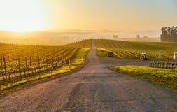 Vineyards at sunrise in California, USA. Vineyards landscape at sunrise in California, USA stock photo