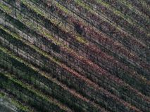 Vineyards at sunset aerial top view royalty free stock image