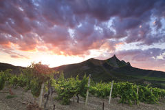 Vineyards at sunset Royalty Free Stock Photography
