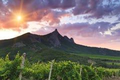 Vineyards at sunset Royalty Free Stock Photos