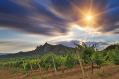 Vineyards at sunset. Crimean mountains royalty free stock image