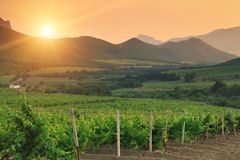 Vineyards at sunset. In France Royalty Free Stock Image