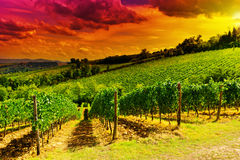 Vineyards at Sunset Stock Images