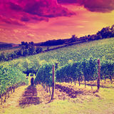 Vineyards at Sunset Royalty Free Stock Images