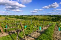Vineyards in the sunshine-Vineyards of Loupiac, Bordeaux Vineyar Royalty Free Stock Photos