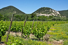 Provençal Vineyards Stock Photo