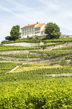 Vineyards in Switzerland Royalty Free Stock Photography
