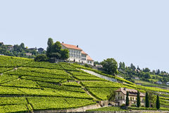 Vineyards in Switzerland Stock Image