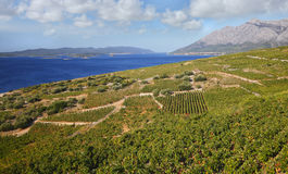 Vineyards Croatia. Nature landscape with vineyards at peninsula Peljesac, Croatia Royalty Free Stock Photo