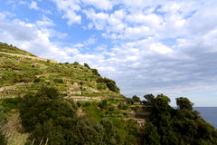 Vineyards on terraced hillside Royalty Free Stock Photography