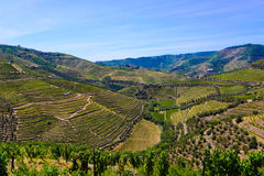 Vineyards Terraces, Douro Mountains Landscape, Oporto Wine royalty free stock photography