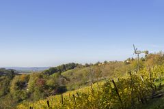 Vineyards and trees in Croatia. Vineyards and trees whit sky in Croatia. Beautiful view in landscapes Stock Photography